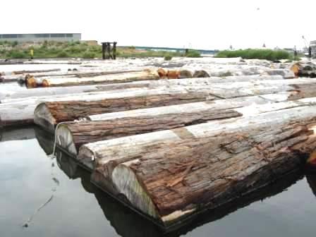 海に浮かぶ材木